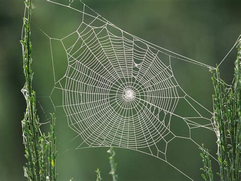 web on spider web trap for insects