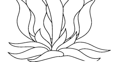 free seaweed for cartoon coloring pages