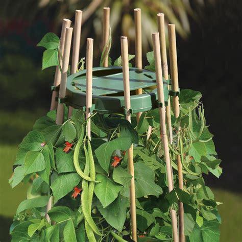 Support Plante Grimpante Bambou by Support Tuteur Haricot Plante Grimpante Accessoires De