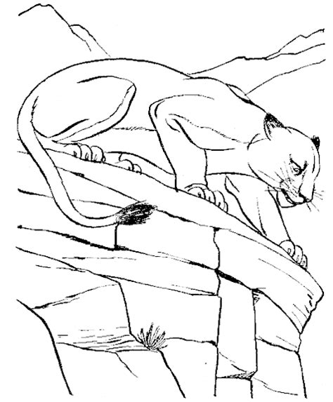 Wildlife Coloring Pages For Kids Coloringpagesabc Com Wildlife Coloring Pages