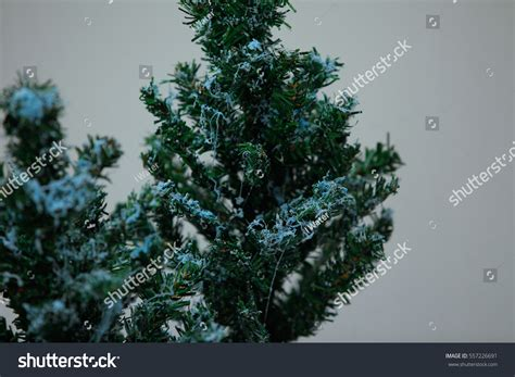 christmas trees on line