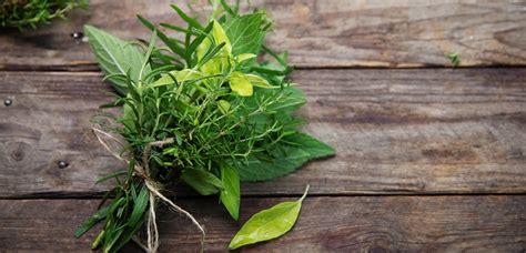 Les Herbes De Provence by Les Herbes De Provence Le Mag De Flora