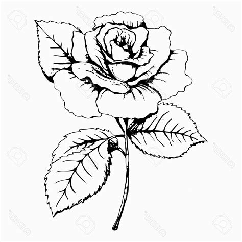 rose flower black and white drawing best 25 rose outline