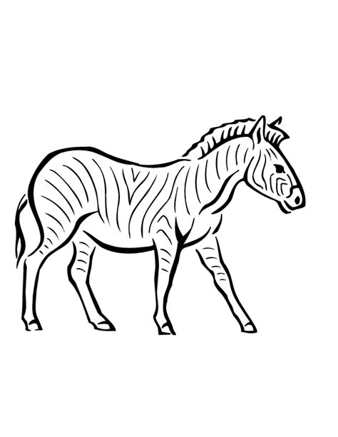 printable zebra free printable zebra coloring pages for kids