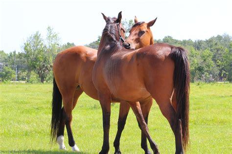 reasons  equine massage therapists    job