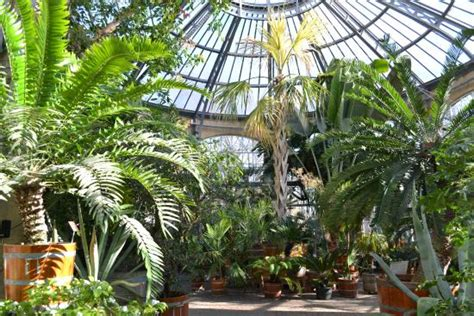 Inside The Glasshouse Picture Of Botanical Garden Amsterdam Botanical Garden