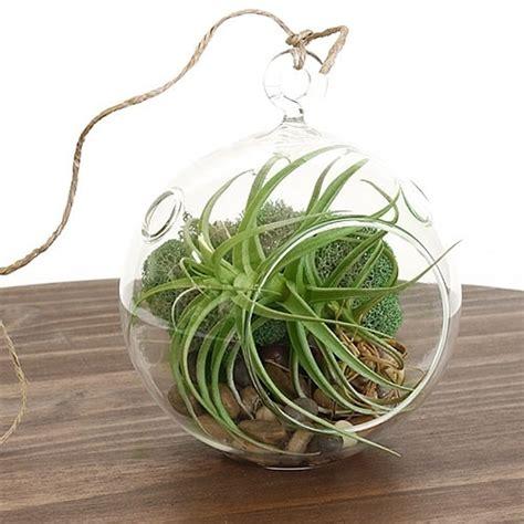 hanging air plant terrarium kit