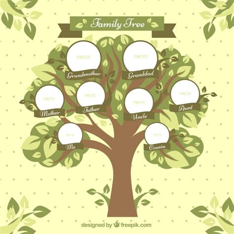 family tree with circles and decorative leaves vector