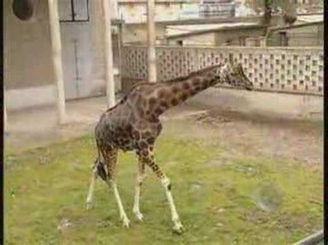 lo zoo di napoli video istituzionale youtube