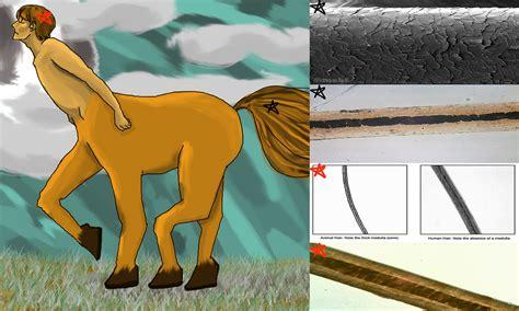 hair vs fur human hair vs animal fur animal coverings