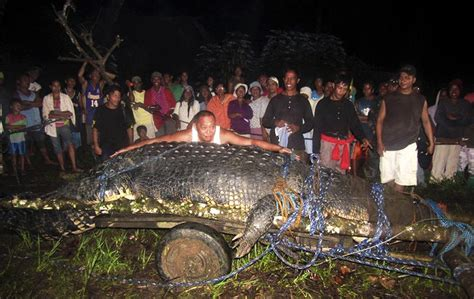 pictures of guinness book of world records crocodile breaks size record suspected in fatal attacks