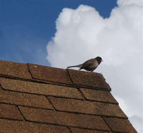 Roof Care 4 Tips To 4 Shingle Roofing Maintenance Tips For A Longer Roof Roof Net