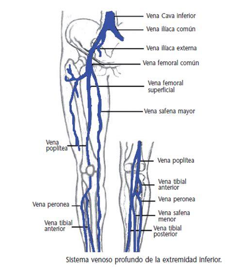 cadenas iliacas comunes rote vascular enfermedad tromboembolica venosa