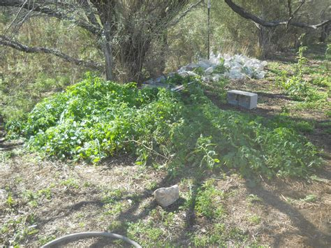 what to plant on west side of house the sifford sojournal garden fall 2016 update i