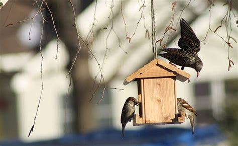 9 expert tips how to attract birds to your garden