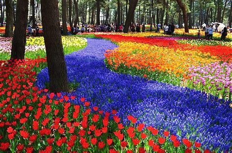 imagenes flores impresionantes lugares impresionantes del mundo 1 de 18 en off topic