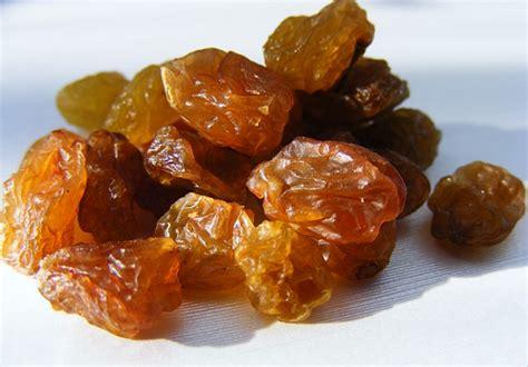 ate raisins can chickens eat raisins tips