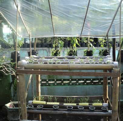 membuat kit hidroponik  pipa batang bambu daun ijo