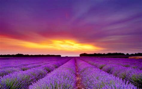 hd lavender field wallpaper download free 51301