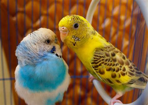 wallpapers love birds wallpapers 40 beautiful love birds wallpapers