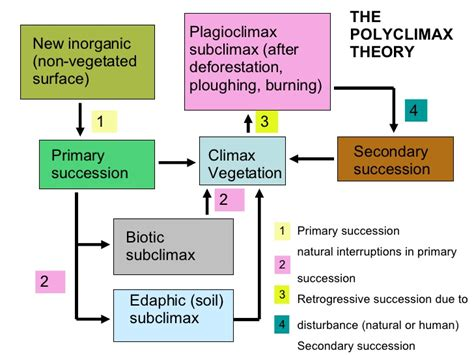 climax pattern theory ecosystems 7 plant succession theories