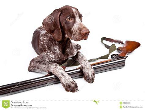 gun puppy with a gun stock photos image 13008653