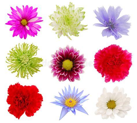 imagenes de varias flores varias flores coloridas imagen de archivo imagen de