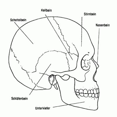 anatomy coloring pages skull printable skull coloring pages coloring me