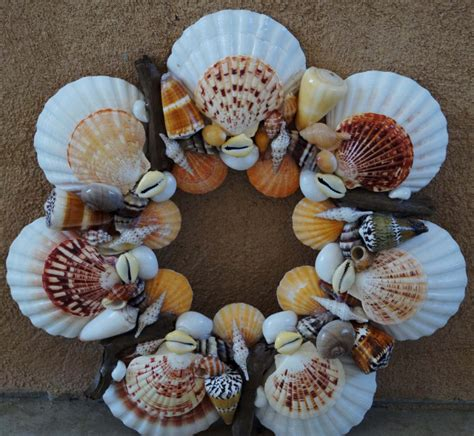 beautiful sea shell vootee