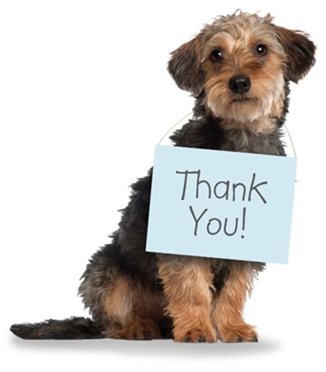 pet technologies on twitter thanks for joining us braubeviale it donate animal adoption agency