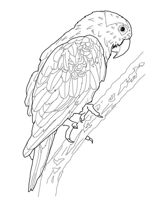 printable coloring in pages free printable parrot coloring pages for kids
