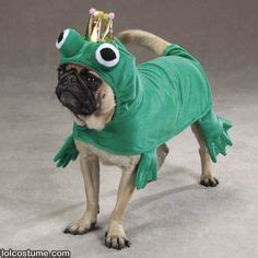 pug frog costume 1000 images about costumes on costumes costumes and