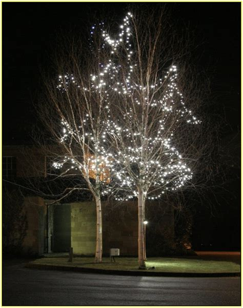 installation of fairy lights in trees outdoor artificial palm trees home design ideas