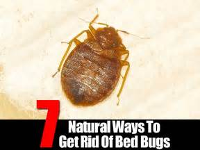 how do exterminators get rid of bed bugs 7 ways for getting rid of bedbugs