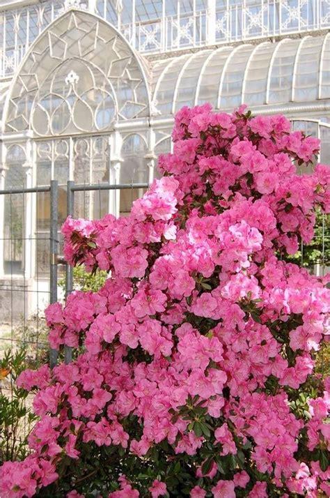 mostre di fiori firenze mostra mercato di piante e fiori al giardino