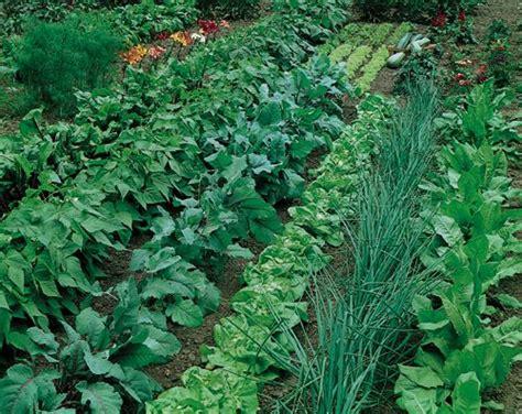 what is vegetable garden vegetable garden ideas on vegetable garden