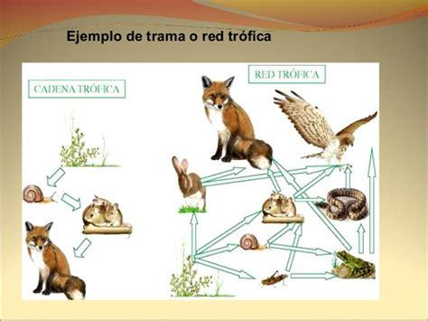 cadenas troficas del paramo cadenas y tramas alimentarias