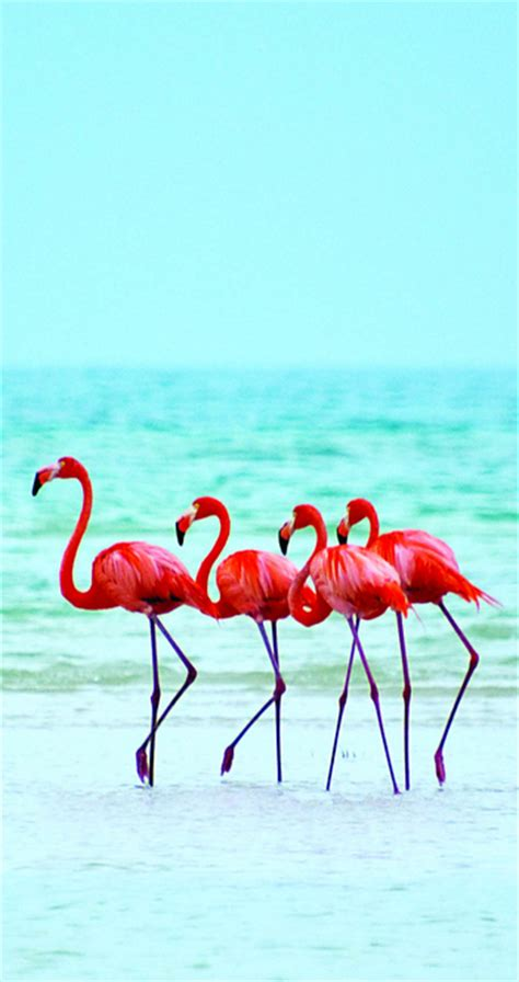 best 25 artificial birds ideas on pinterest tropical best 25 tropical animals ideas on pinterest tropical