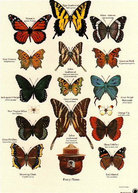 insect identification ideas  pinterest