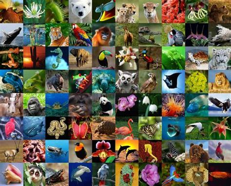 Where All The Animals by All Animals In The World List Www Imgkid The Image