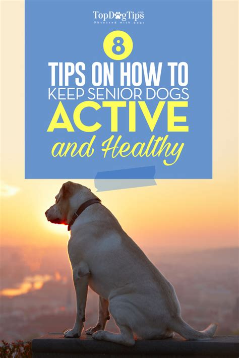 8 Tips On How To Choose A Vet For Your Pet by 8 Tips On How To Keep Your Senior Active And Healthy