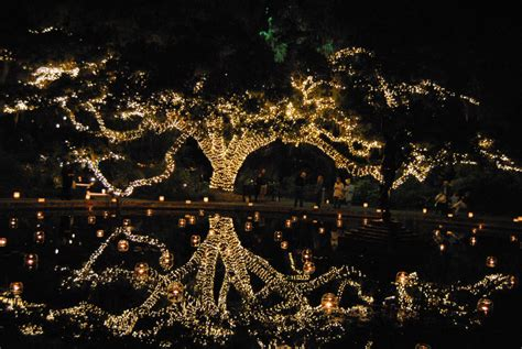 myrtle light myrtle lights decoratingspecial com