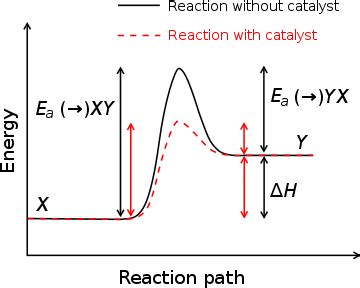 section 3 lesson 2 the catalytic cycle what do enzymes do