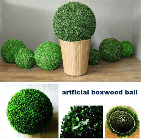 wholesale topiary topiary plants wholesale images