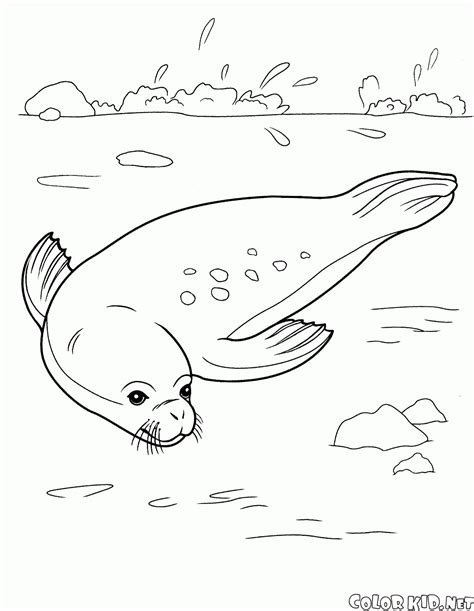 animals an coloring book with easy and relaxing coloring pages for animal books coloring page sea