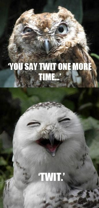 White Owl Meme - funny owls owl funny meme whoo whooooo pinterest