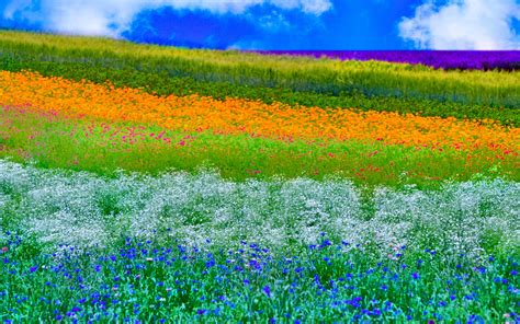 colors of spring nature 60 colors of spring 17april2015thursday 181629