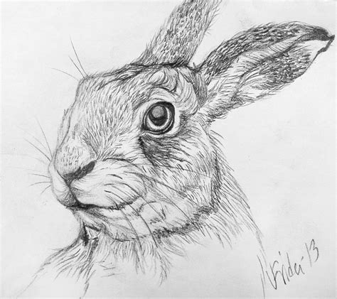 Rabbit Drawing For