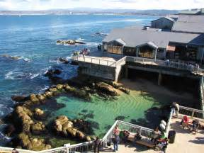 where I was lucky enough to volunteer at the Monterey Bay Aquarium