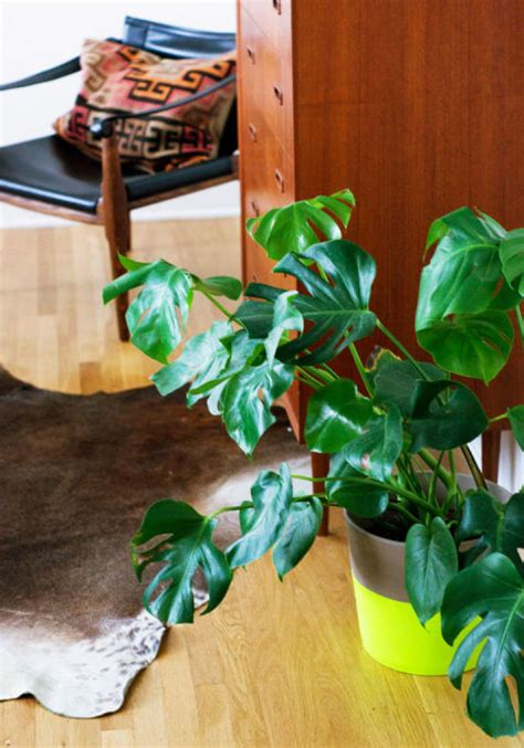 easy light displays 15 best indoor plants inside plants for small space